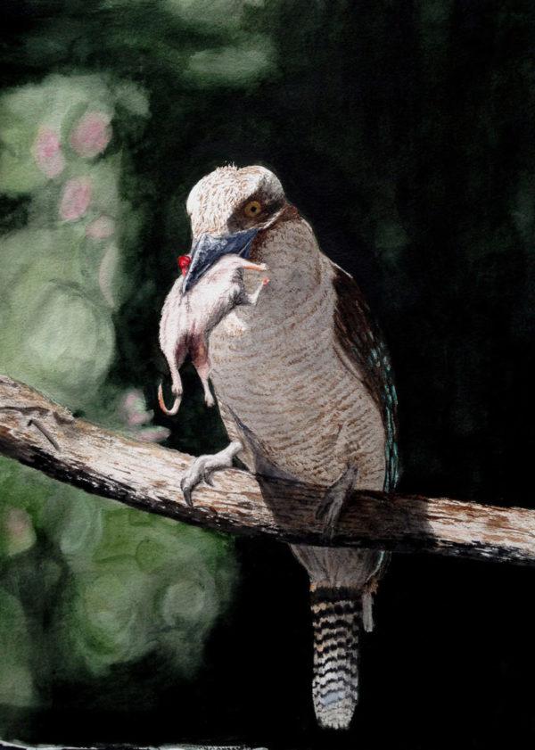 Kookaburra eating rat